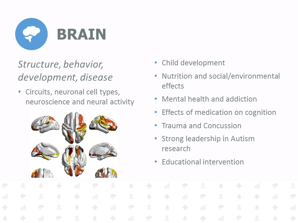 Structure, behavior, development, disease. Circuits, neuronal cell types, neuroscience and neural activity. Child development. Nutrition and social/environmental effects. Mental health and addiction. Effects of medication on cognition. Trauma and Concussion. Strong leadership in Autism research. Educational intervention.