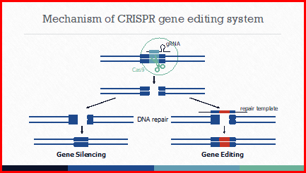 Graphic: Mechanism of CRISPR gene editing system